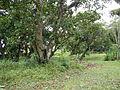 SanJuan,BatangasHousesjf8029 22.JPG