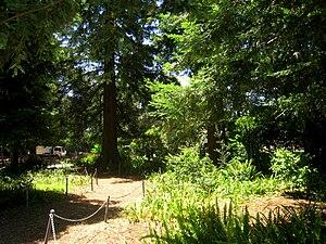 Image of San Mateo Arboretum: http://dbpedia.org/resource/San_Mateo_Arboretum