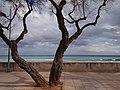 Sant Llorenç des Cardassar, Balearic Islands, Spain - panoramio (15).jpg