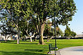Sara Mendez Park Trees and Picnic Tables, Norwalk, California.jpg