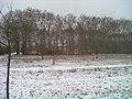 Schlosspark vom Freudentaler Schloss - geo.hlipp.de - 33017.jpg