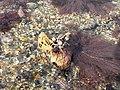 Seaweed exposure - geograph.org.uk - 817938.jpg