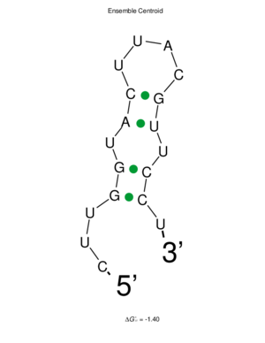 C9orf135 - Image: Sfold 5' UTR