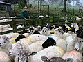 Sheep Pens, West Northdale Farm - geograph.org.uk - 106207.jpg