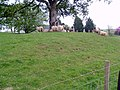 Sheep at Mollance - geograph.org.uk - 461485.jpg