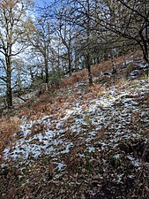 Sierra de los Alcornocales algibe.jpg