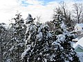 Silver Spring Snow 01.jpg