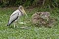 Singapore Bird Park-16and (2928391698).jpg