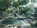 Sistema silvopastoril en cuenca alta del río Coapa, Pijijiapan, Chiapas 31.jpg