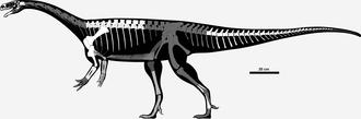 Unaysaurus - Skeletal diagram showing known remains