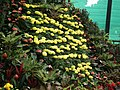 Snap from Lalbagh Flower Show Aug 2013 7891.JPG
