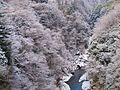 Snow - panoramio (46).jpg