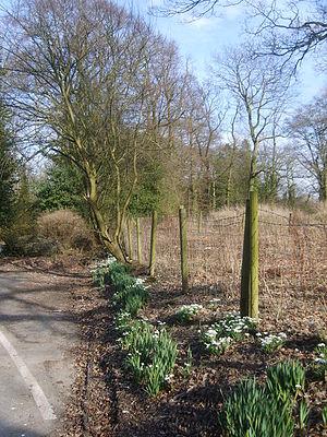 Broughton, Lancashire - Image: Snowdrops geograph.org.uk 1758715