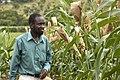 Sorghum breeder, Zimbabwe.jpg
