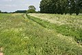South Drain near Glinton - geograph.org.uk - 443113.jpg