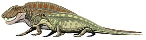 Sphenacodon - S. ferox and the larger S. ferocior