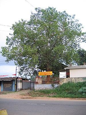 Meenangadi - Image: Sree malsyavathara mahavishnu temple