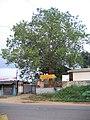 Sree malsyavathara mahavishnu temple.jpg
