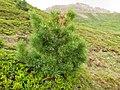 St. Moritz Hike-32 (9706468215).jpg