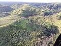 Starr-141014-2198-Caesalpinia decapetala-aerial view-Kakipi Gulch Haiku-Maui (25220943796).jpg