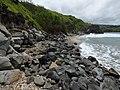 Starr-180421-0031-Thespesia populnea-coastal ledge-Honolua Lipoa Point-Maui (43458523221).jpg