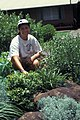 Starr-970503-0326-Dianella sandwicensis-planting-Makawao-Maui (24486711476).jpg