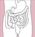 Stomach colon rectum diagram (dumb version).png