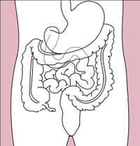 Stomach colon rectum diagram (dumb version).png