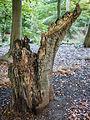 Stump (8105243901).jpg