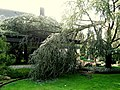 Sturmschaden vom Baum.JPG