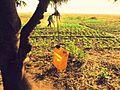 Subsistence Farming in Zambia.jpg