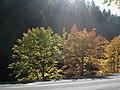 Sunlight through the trees (3021481875).jpg