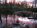 Sunset - Hem Heath Nature Reserve - geograph.org.uk - 55039.jpg