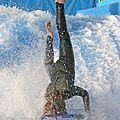 Surf IMG 1061 (3121125742).jpg
