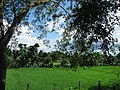 Surroundings of the mound of Chandraketugarh 09.jpg