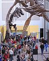 T-Rex Skeleton - Denver Museum of Nature.jpg
