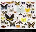 TNHC Lepidoptera (21156920661).jpg