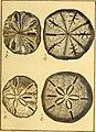 Tableau encyclopédique et méthodique des trois règnes de la nature (1791) (14768235145).jpg