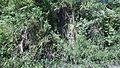 Talaingod-San Fernando Road - panoramio (59).jpg