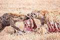 Tanzania - Spare ribs rare (11104928563).jpg