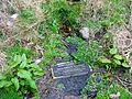 Tanzie Well or St Anne's or Washing House Well.JPG