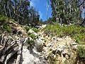 Telegraph Saddle to Sealers Cove Track, Wilsons Promontory National Park 03.jpg