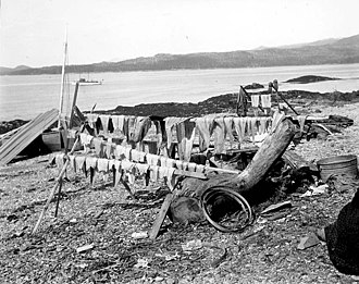 Gravina Island - Camping site of king salmon trollers at Vallenar Point, 1902