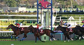The 44th Stayers Stakes 20101204R1.jpg