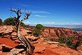 The American West (4959938663).jpg