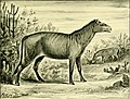 The Horse - its treatment in health and disease, with a complete guide to breeding, training and management (1905) (14592019697).jpg