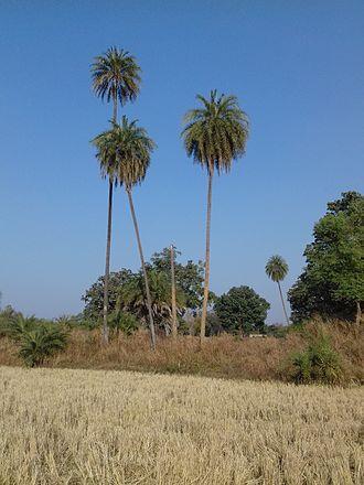 Bhandarpuri - The beautiful Khajur Formation