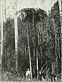 The Land of the Lyre bird; a story of early settlement in the great forest of south Gippsland. Being a description of the Big Scrub in its virgin state with its birds and animals, and of the (14563324007).jpg