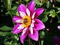The bee.JPG