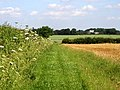 The footpath from Preston to Wyton - geograph.org.uk - 20960.jpg